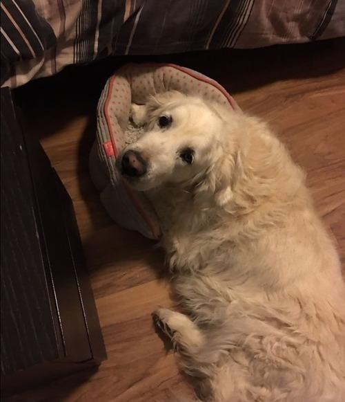 犬のベッドが小さい06