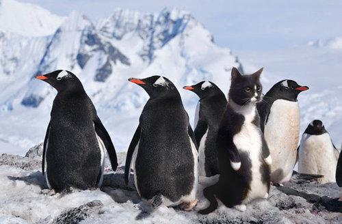 ペンギン猫02