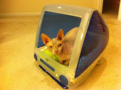 iMacと猫05