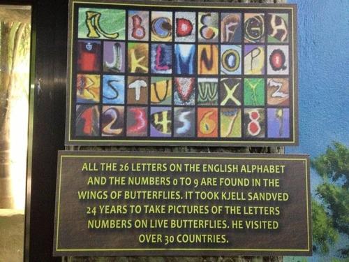 89番の蝶々09
