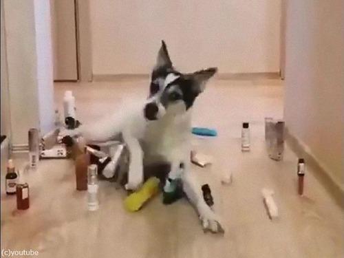猫と犬の障害物回避05