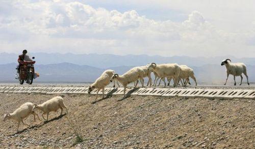 道路を渡る動物04