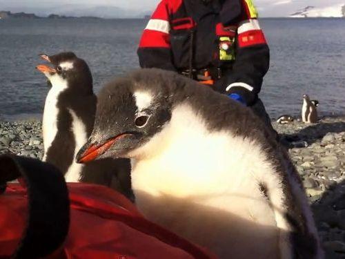 ペンギンの赤ちゃんが乗ってきた01