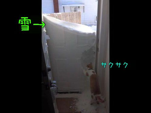 玄関の雪と猫00