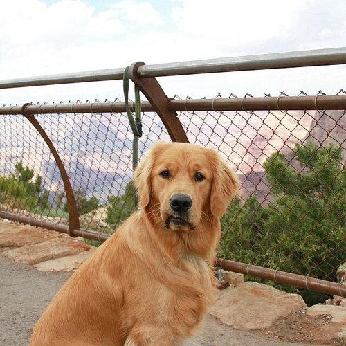世界で最も感動の薄い犬11