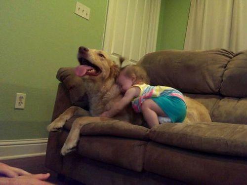犬と娘の3年後04