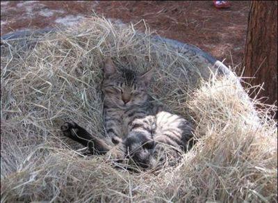 猫の王国14