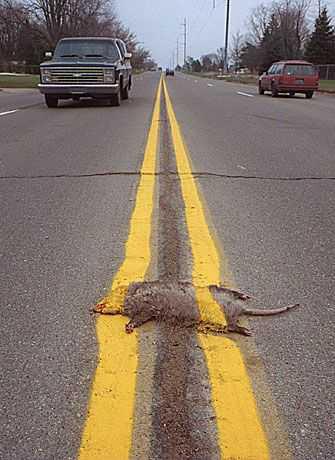 無責任な道路の線