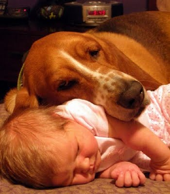 赤ちゃんとペット06