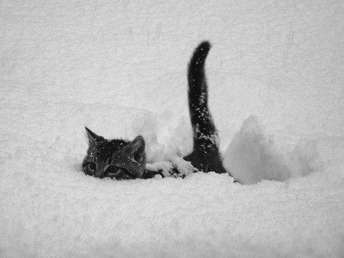 雪を喜ぶ動物07