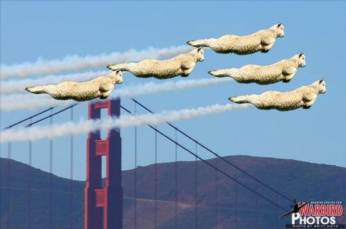 羊ジャンプ12
