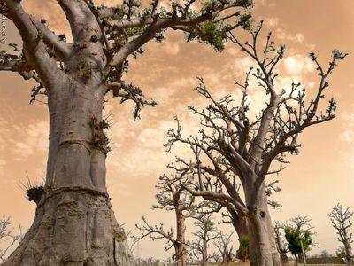 凄い木11