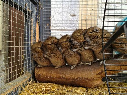 11並んだり列になったりしている動物たち