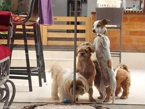 犬たちがドアをチームワークで開ける00