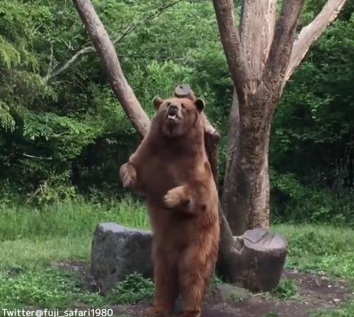 ダンスするクマがかわいい04