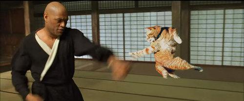 最高のポーズを決める猫09