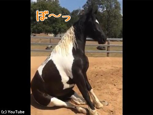 絶対動かない馬00