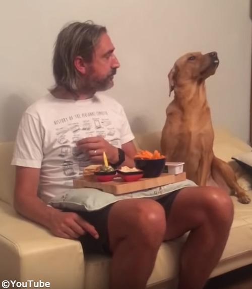 犬「べ、べつに興味ないし!」02