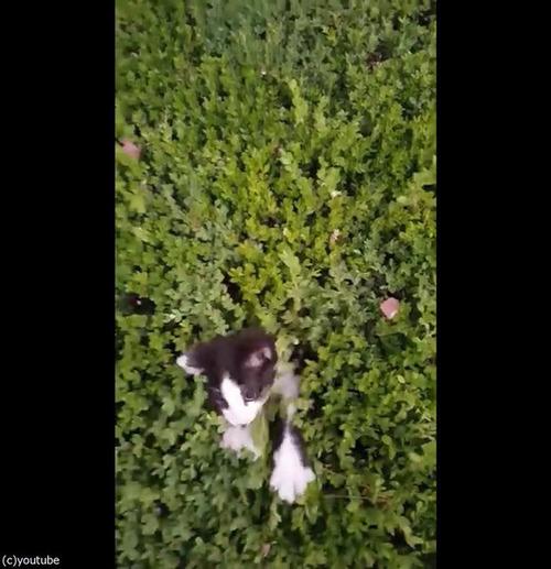 茂みから子猫06