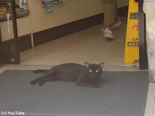 タイの野良猫の涼み方00