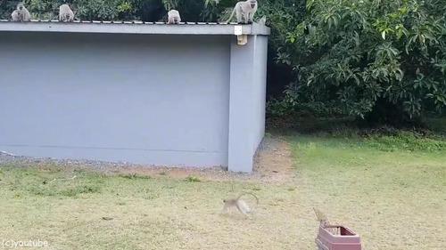 ケガした猿が家族の元へ02