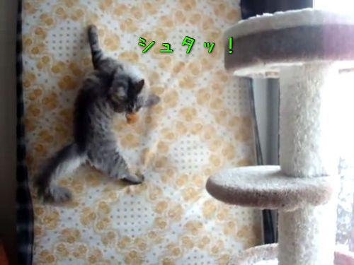 壁を登る猫00