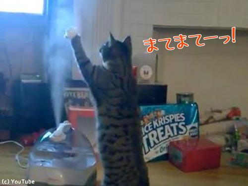 加湿器VS猫00