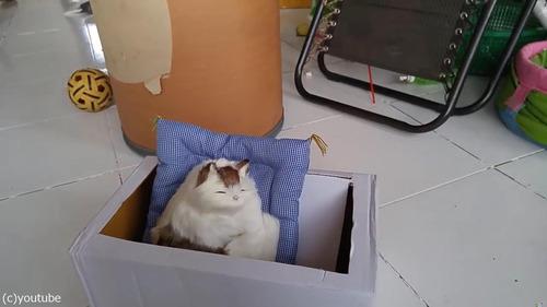 猫のおもちゃにびっくりする猫たち04