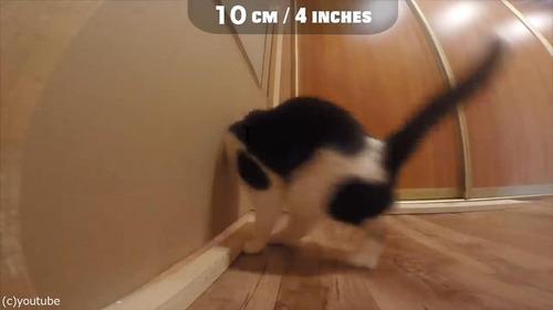 猫が通れる穴のサイズを実験08