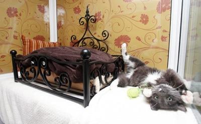 猫の高級ホテル02