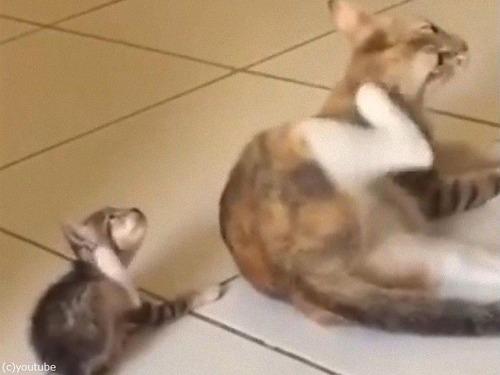 ママの動きを真似しようとする子猫00