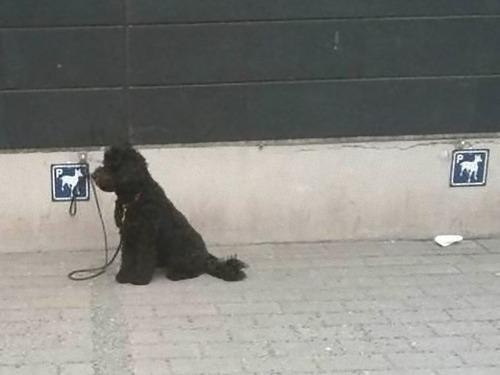 犬用のパーキング02