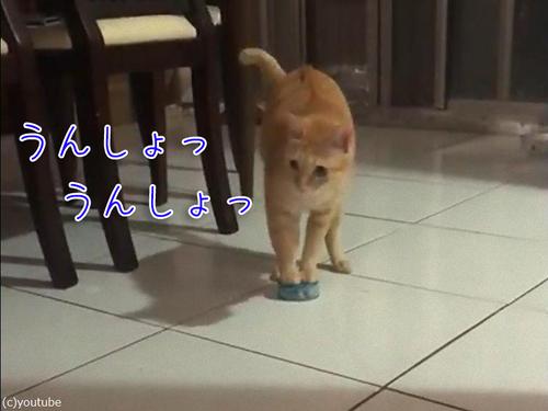 猫缶を引きずる猫00