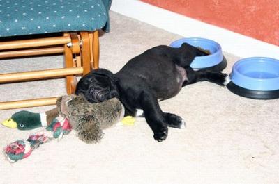 眠る犬08