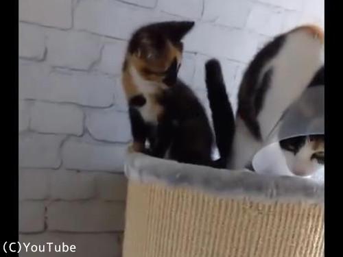4匹の猫02