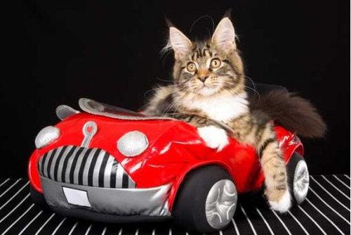 猫と乗り物10