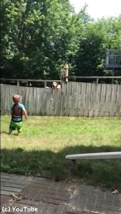 フェンス越しに遊ぶワンコと子ども02