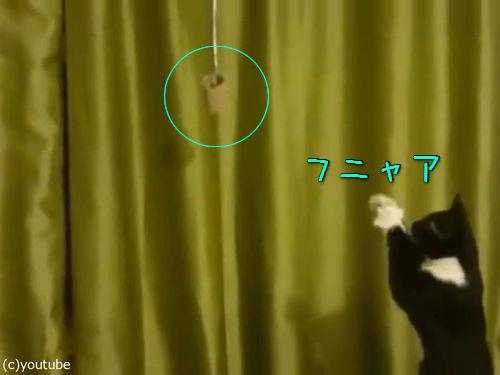 魔法を使いたい猫00