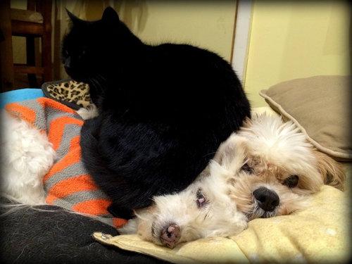 誰にも心を開かなかった犬が、猫と親友に08