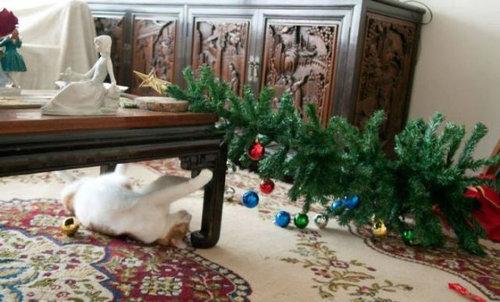 クリスマスとペット15