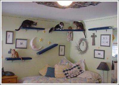 猫用の足場10