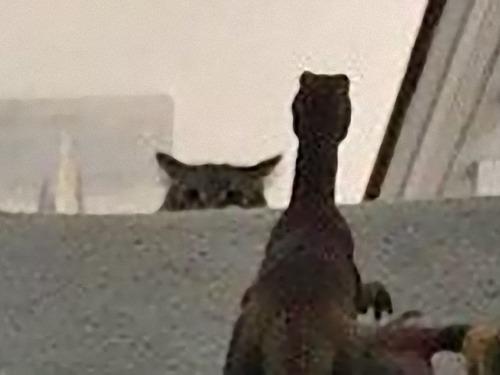 猫を2階に上げない方法02