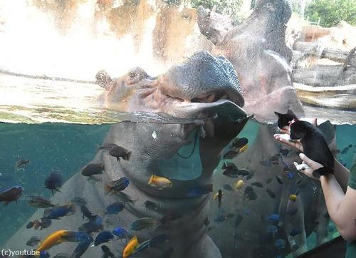 犬や猫が動物園を訪れる06