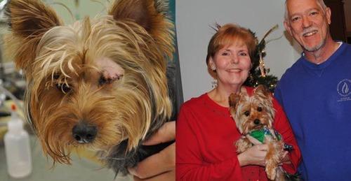 救助された犬や猫20