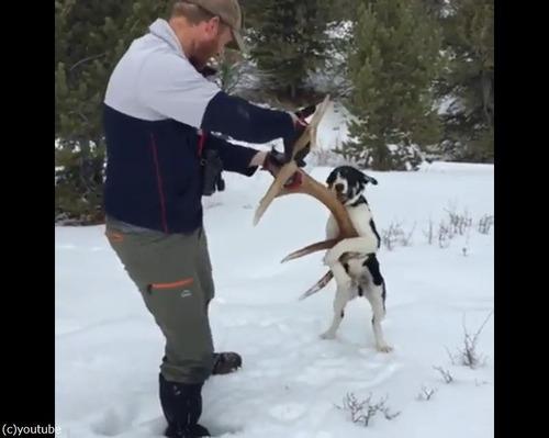 愛犬が雪の中で何か見つけたようだ…すごい執着心02