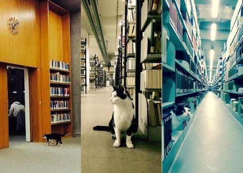 ドイツの大学で暮らす猫07