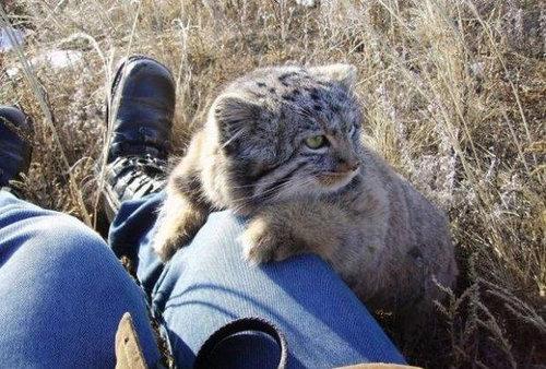 ロシアの農夫「子猫を拾ったつもりが…」05