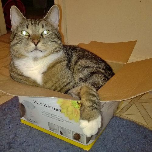 箱入り猫02