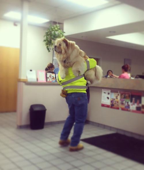 獣医に行くと悟った犬14