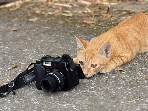 カメラマンな動物00